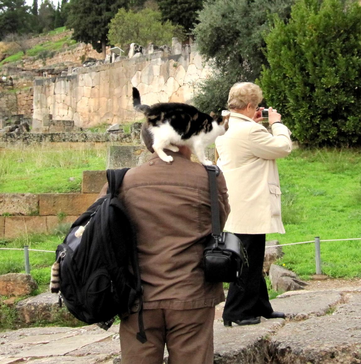 Кошки бесцеремонно катаются на спине. (Греция)