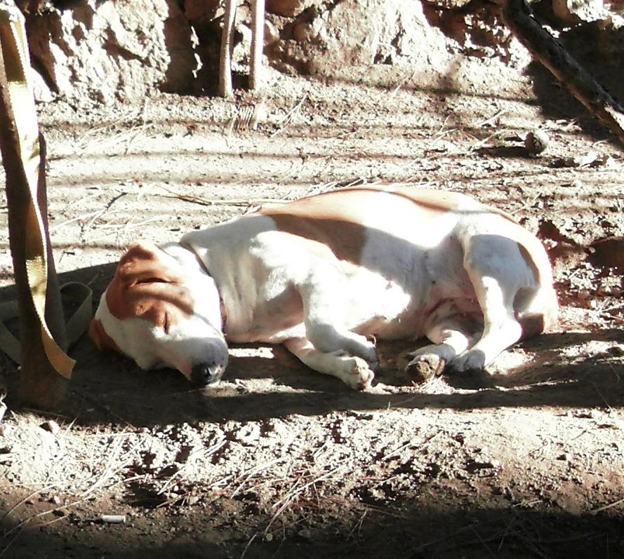 Ленивый пёсик (Греция)