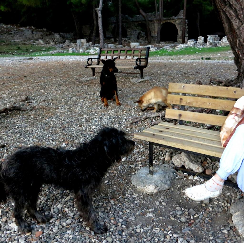 Собаки-попрошайки в Турции