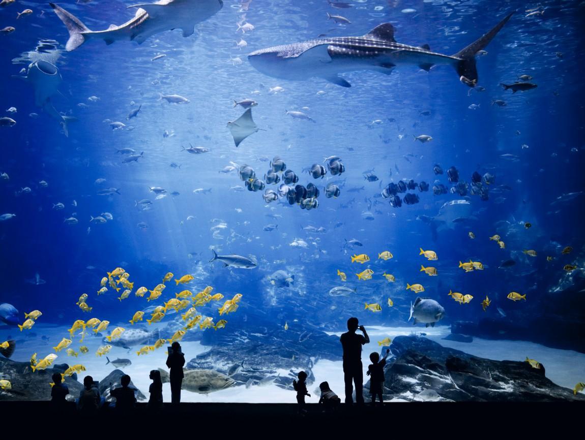Лондонский океанариум