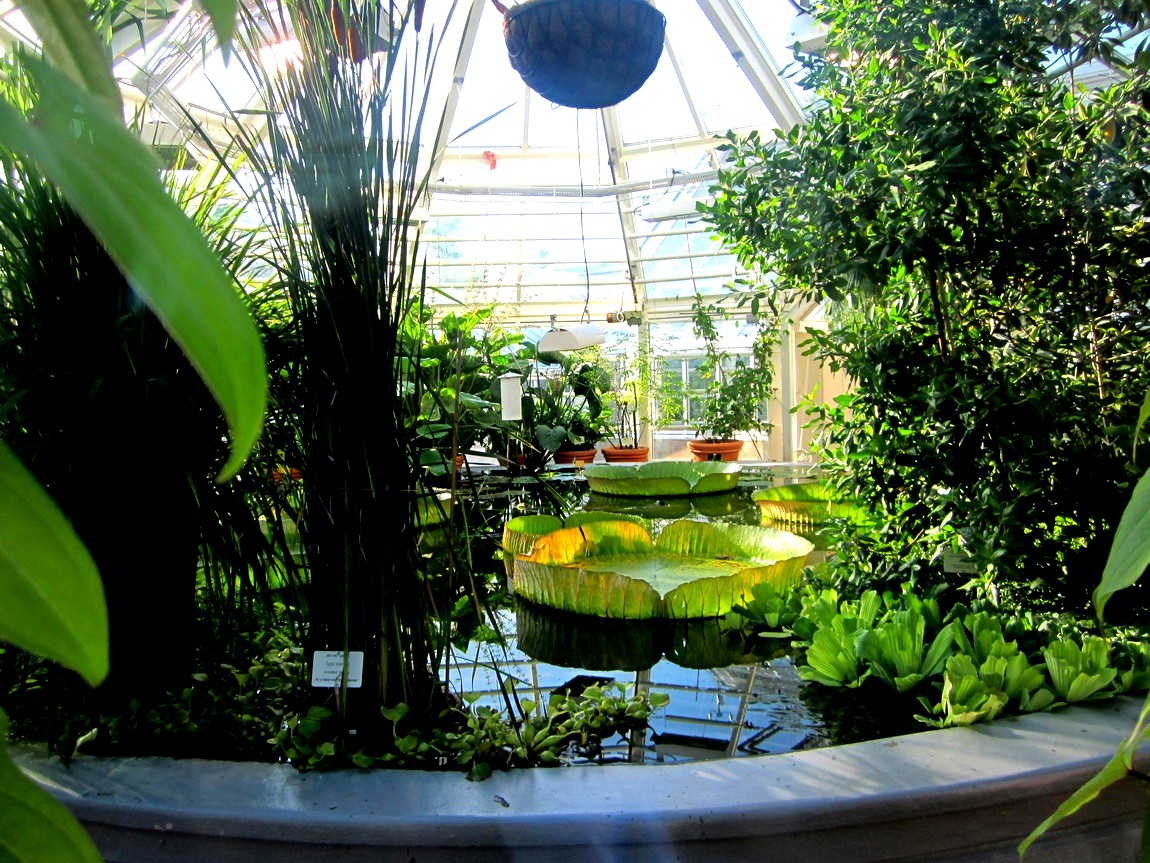 Ботанический сад в городе Хельсинки (Финляндия).