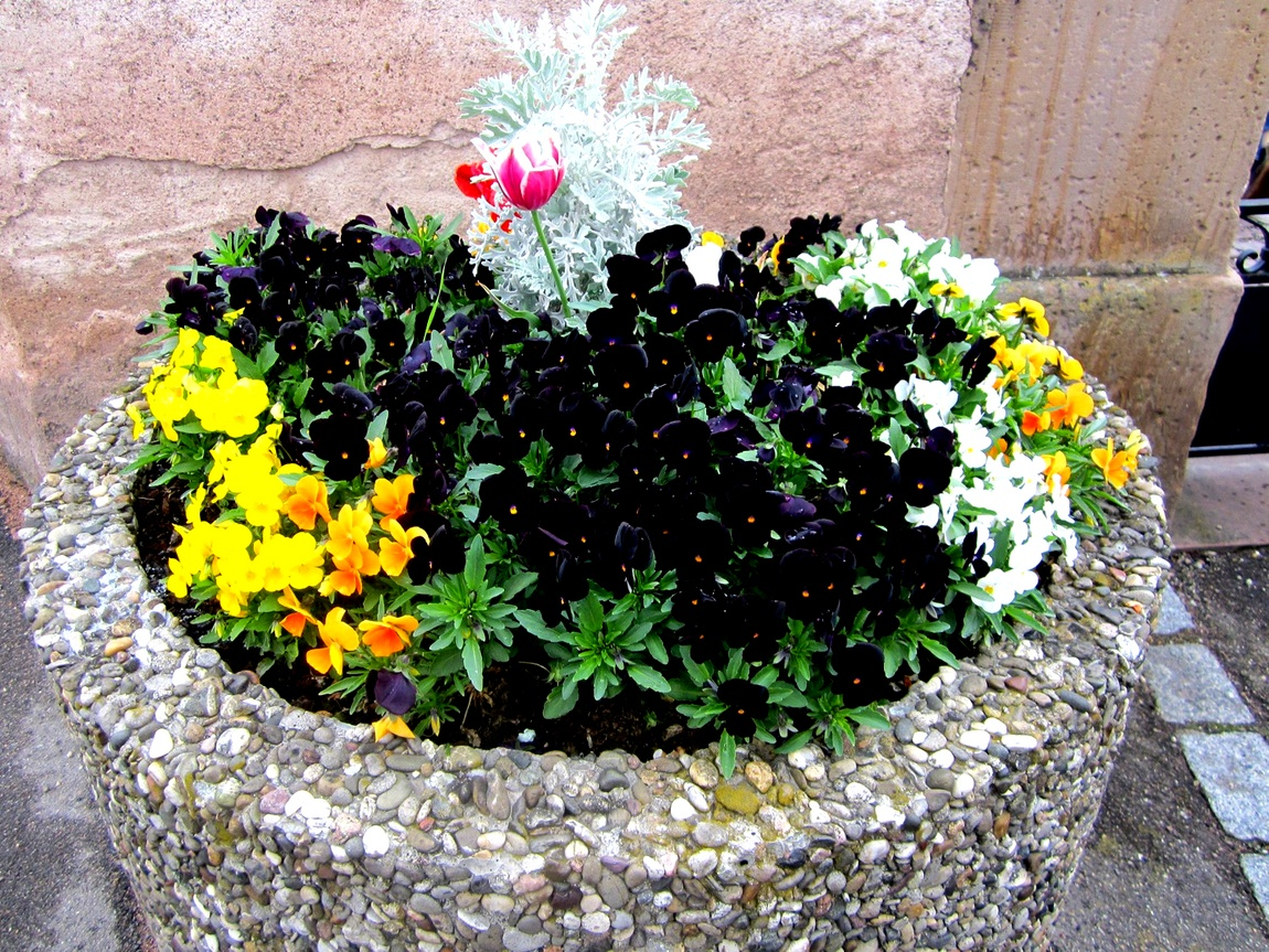 Цветы Германии