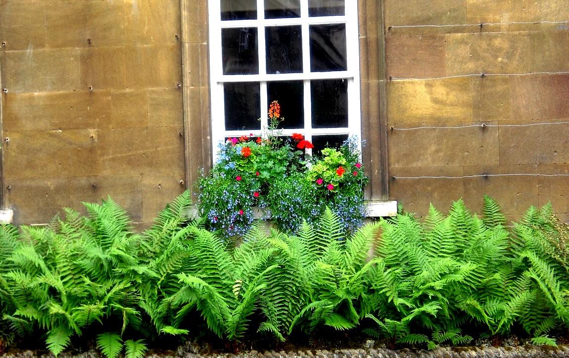 Цветы Англии