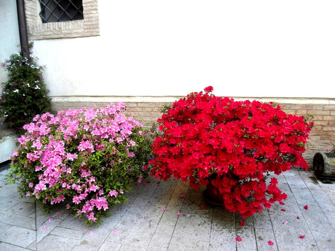 Цветники Италии