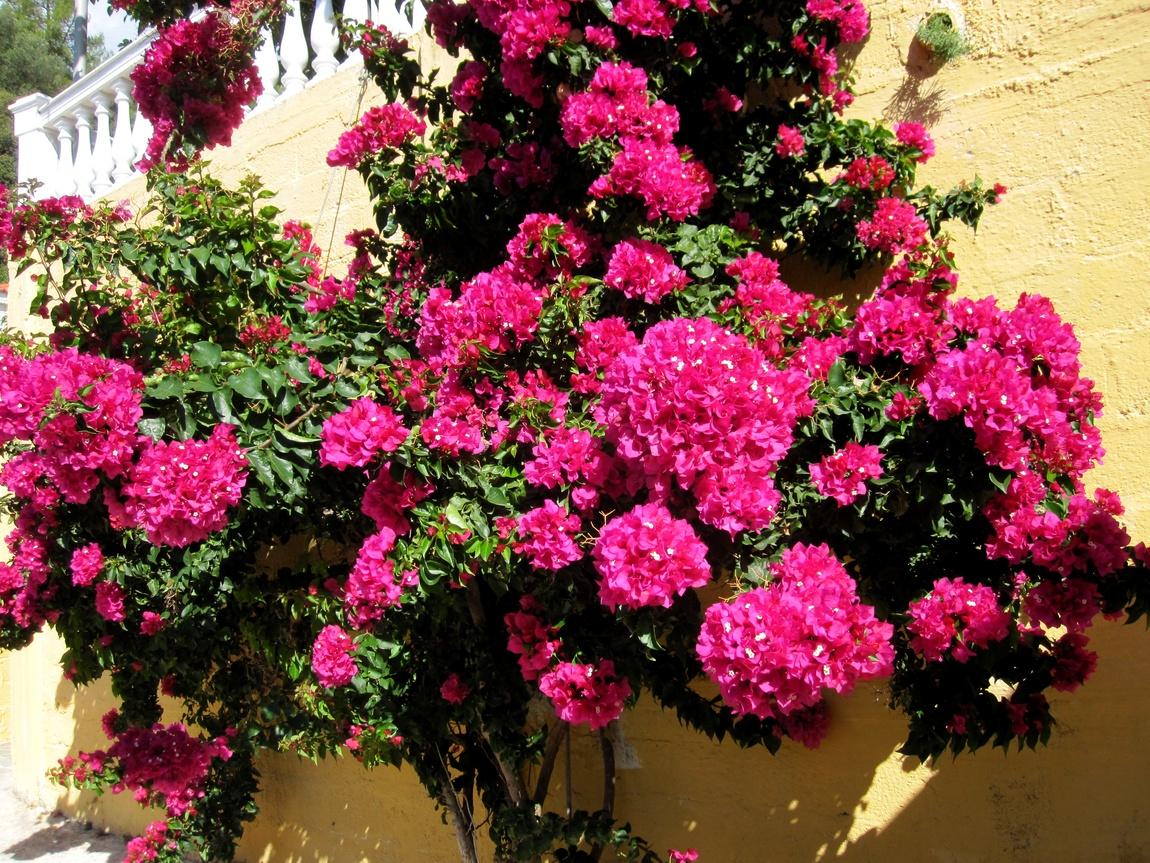 Цветы Греции