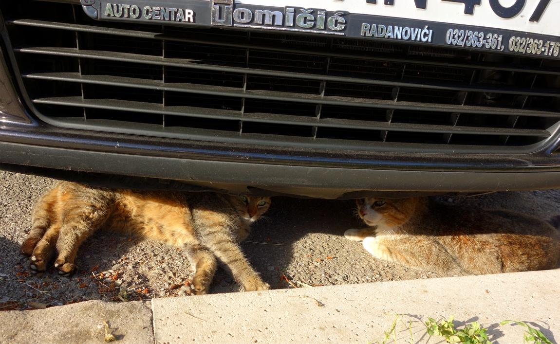 Кошка и кот знакомятся под машиной