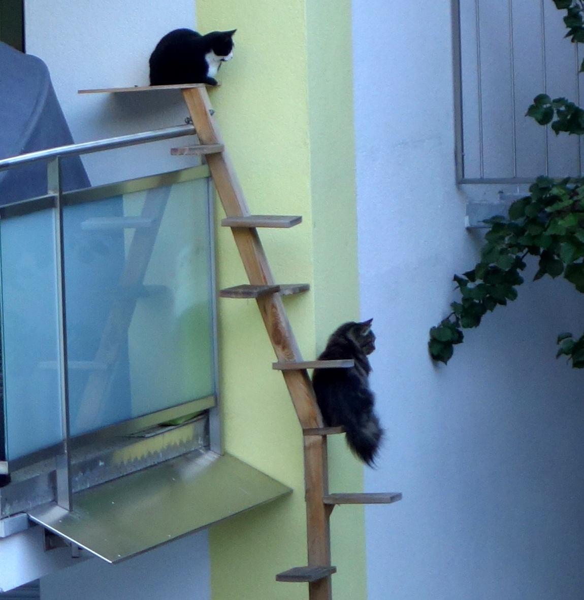 Кошки знакомятся в Австрии