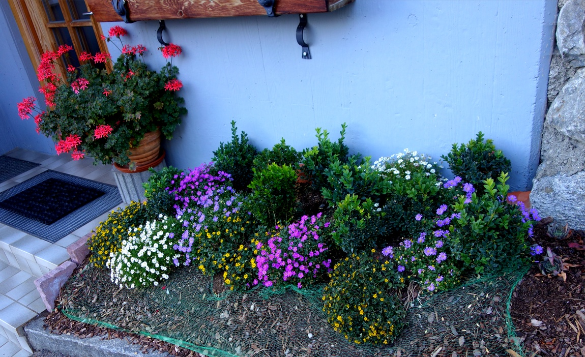 Цветы в Австрии