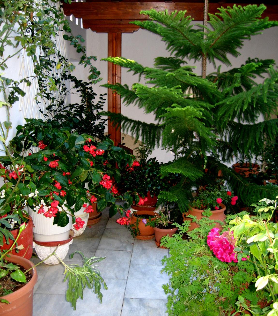 Цветы во дворе монастыря Греция