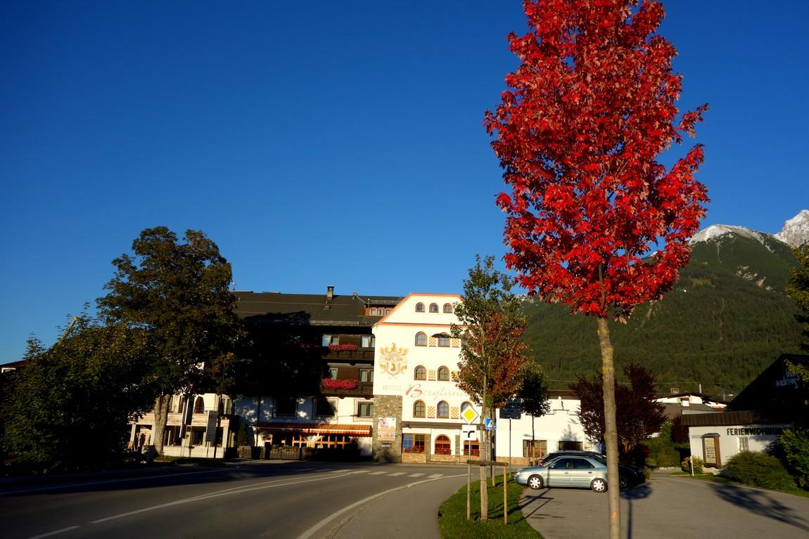 Красная листва дерева в Австрии