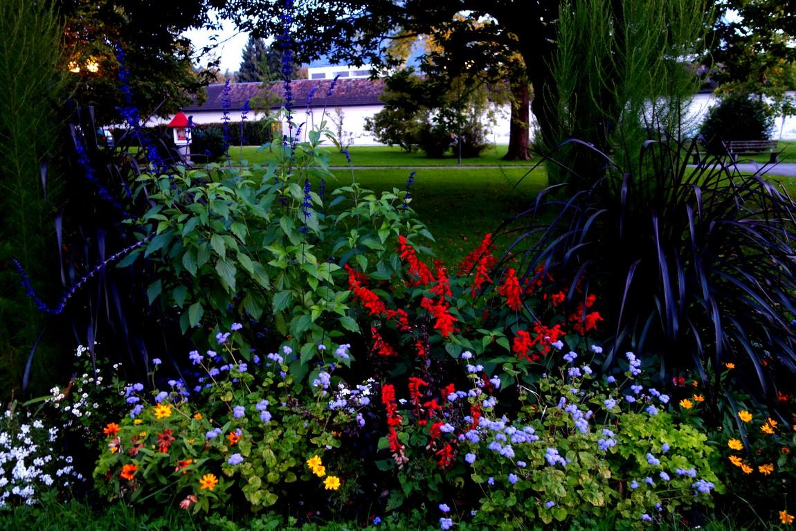 Цветы в парке Австрии