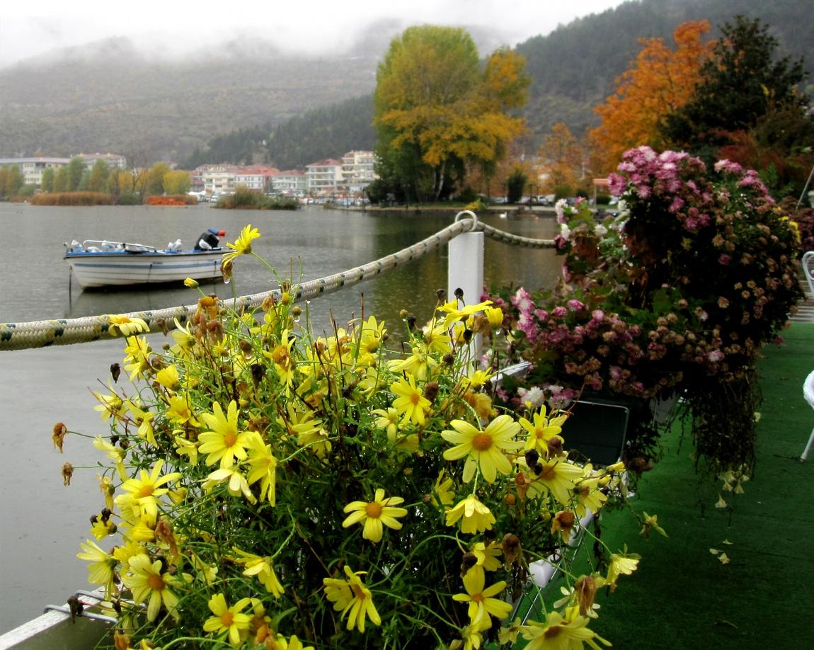 Цветы в Греции