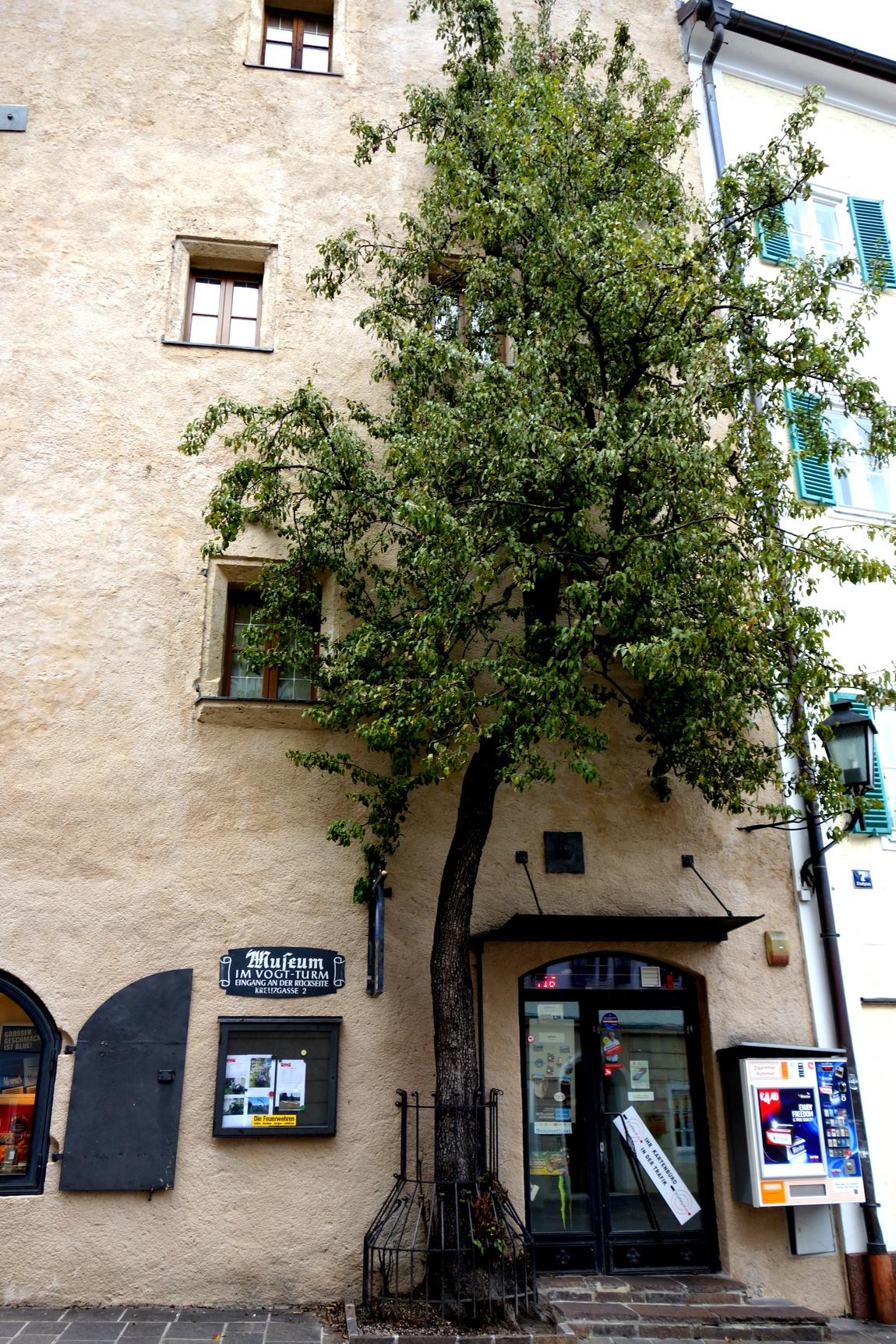 Плоское дерево в Австрии