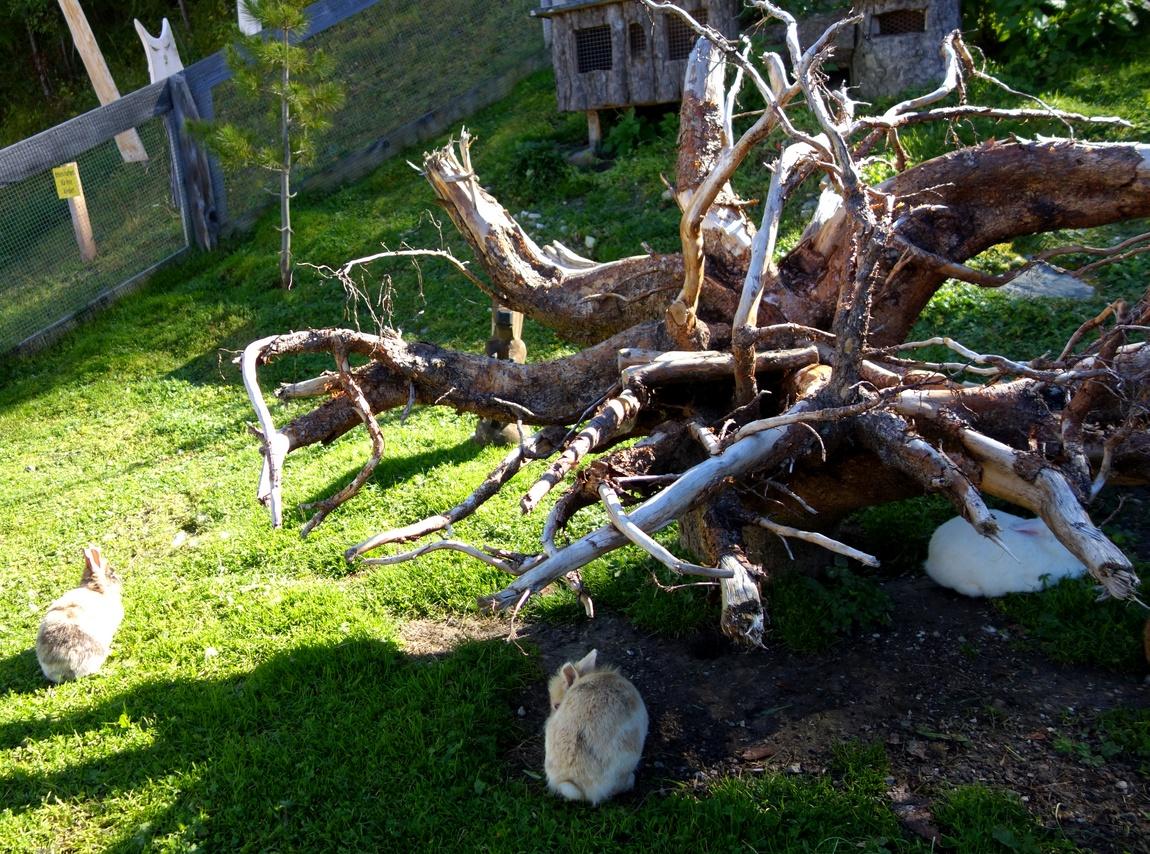 Кролики на вершине горы Elfer в Австрии