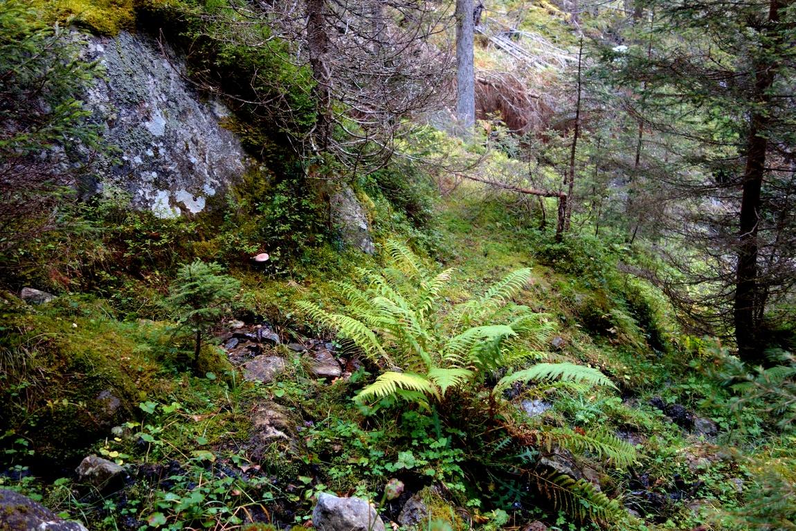Лес в горах Австрии
