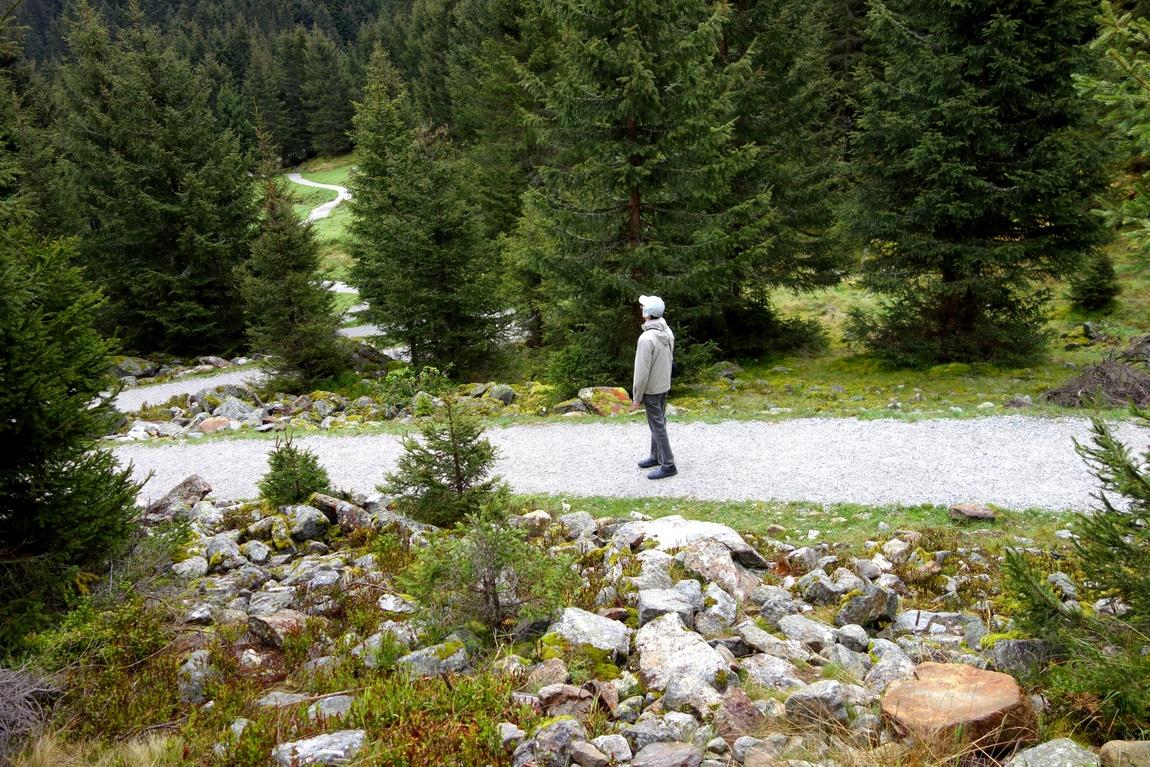 Тропы в лесу Австрии