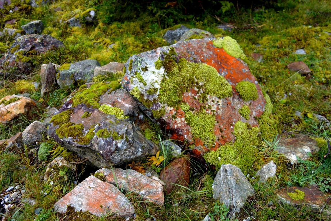 Камни в горном лесу Австрии