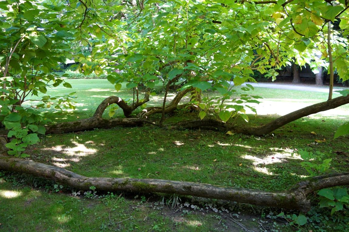Парк в Инсбурге