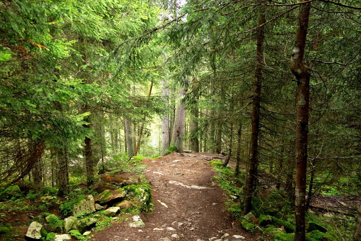 Тропа в лесу Австрии