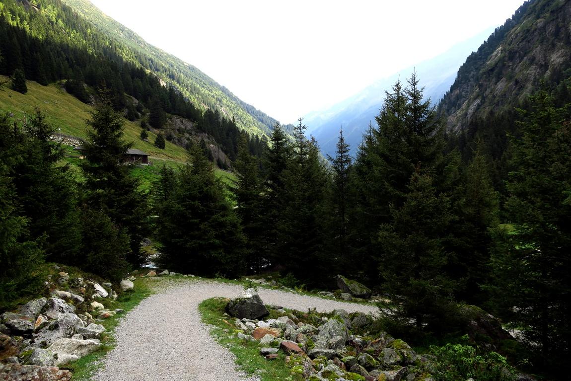 В лесу Австрии