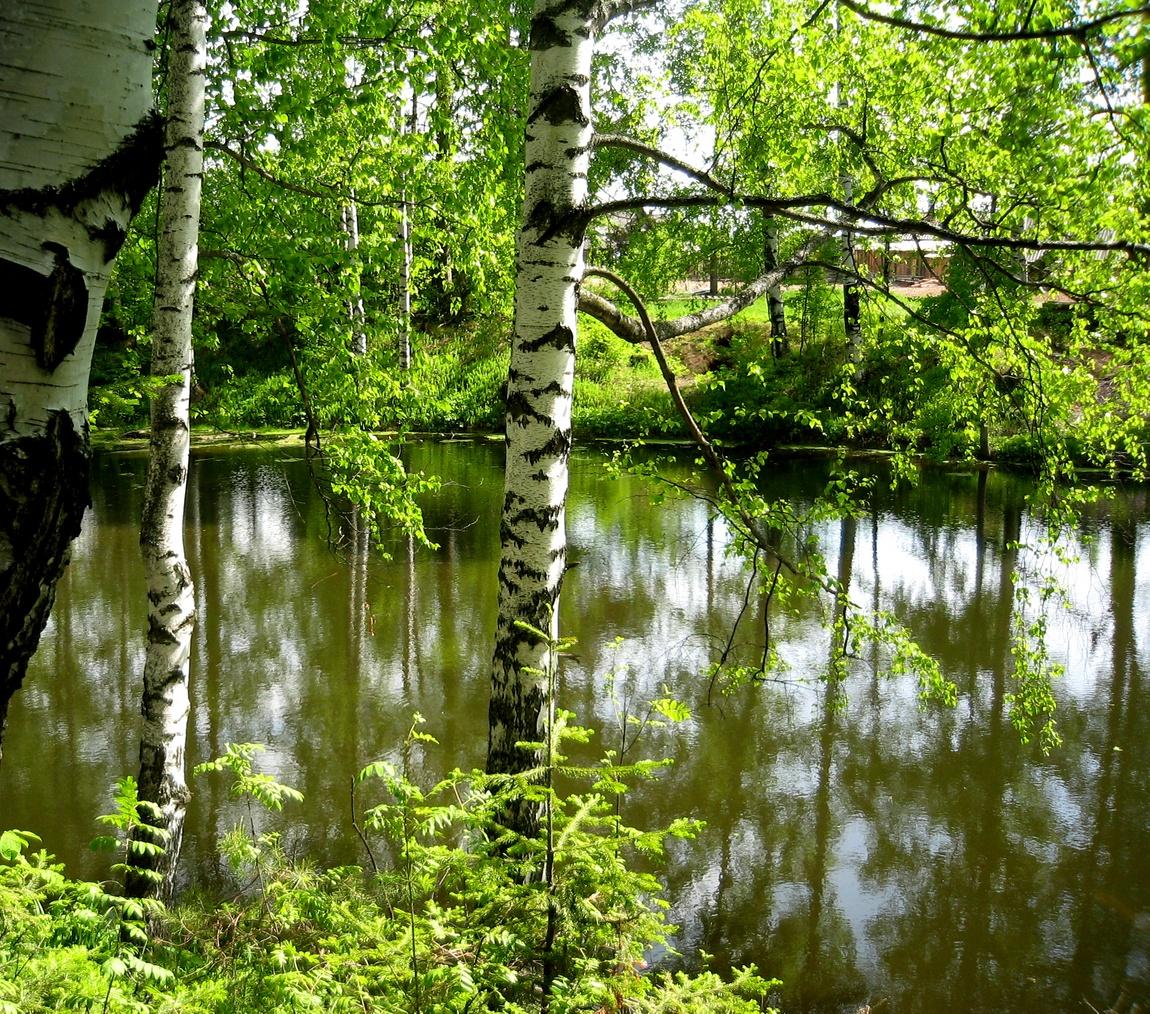 Савичи - пруд
