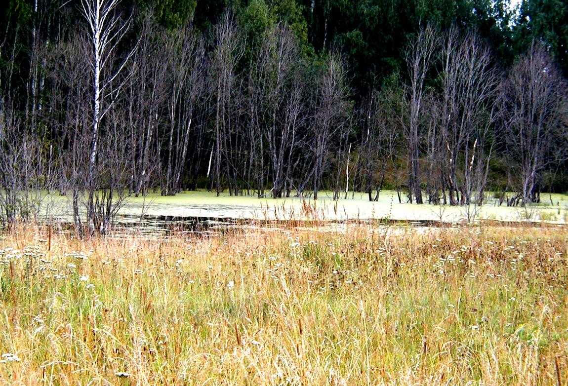 Природа Яранский р. у д. Щёкотово