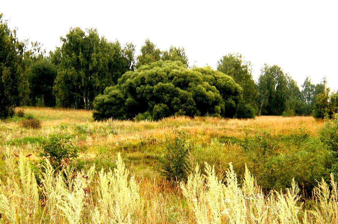 Природа Яранской обл. у д Щёкотово