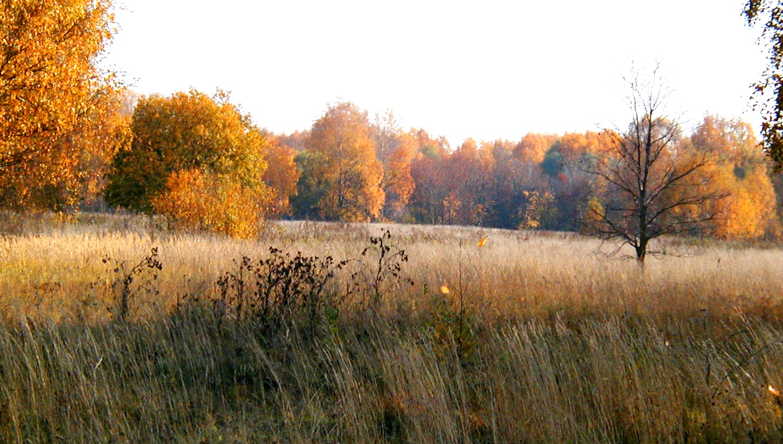 Поле где была деревня Щёкотово