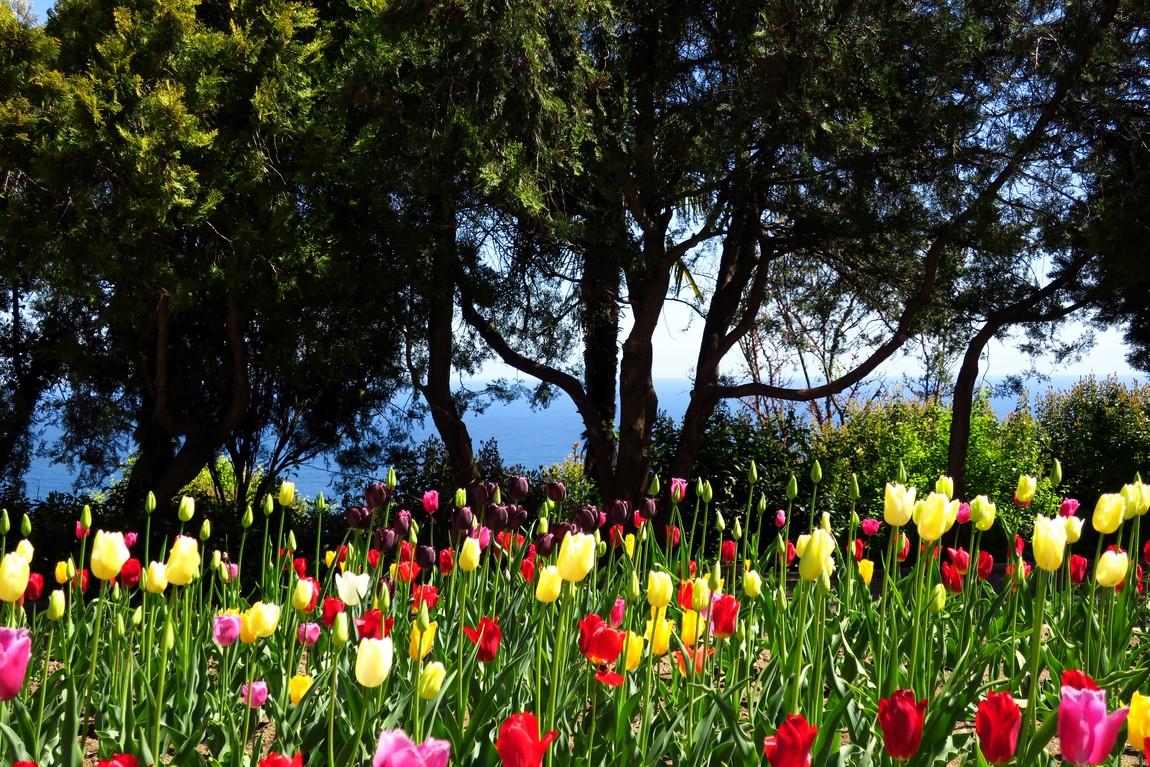 Ливадийский дворец - цветники