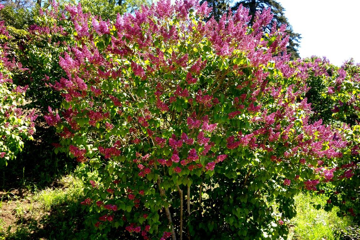 Массандровский сад