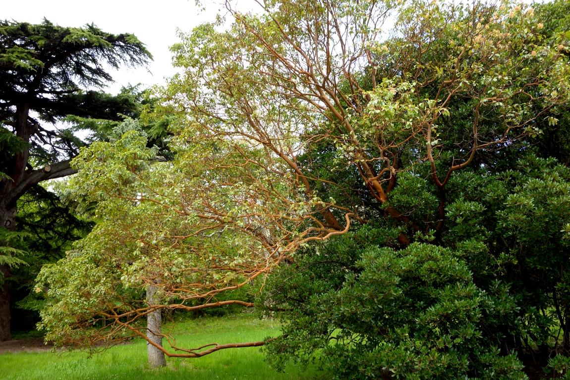 Деревья а парке Крыма