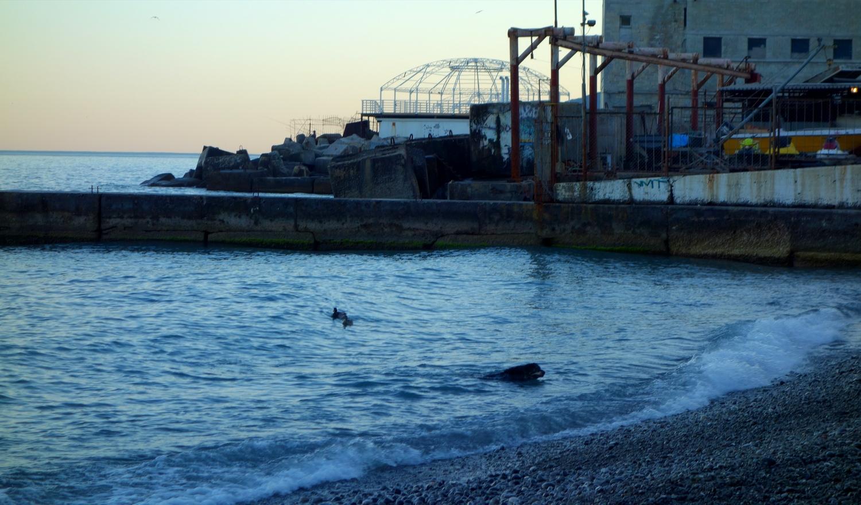 Плавающие за утками в море собаки