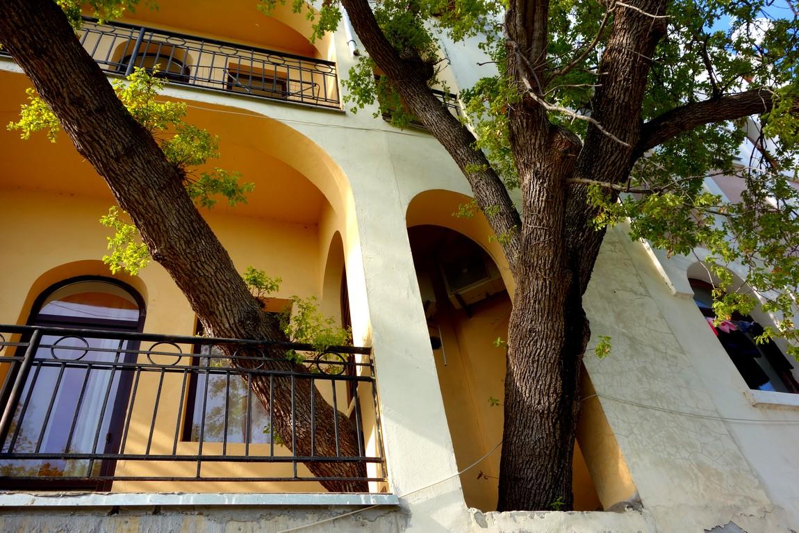 Кореиз - частный дом и дерево из окна (Крым)