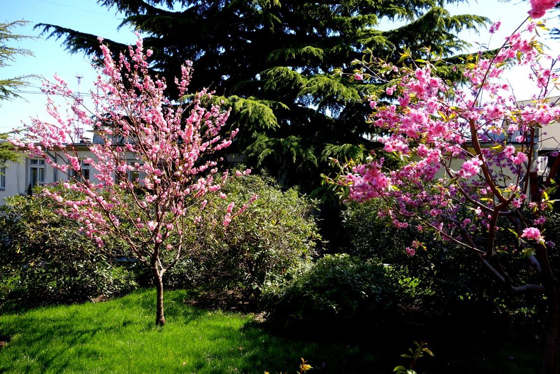 Деревья Крыма