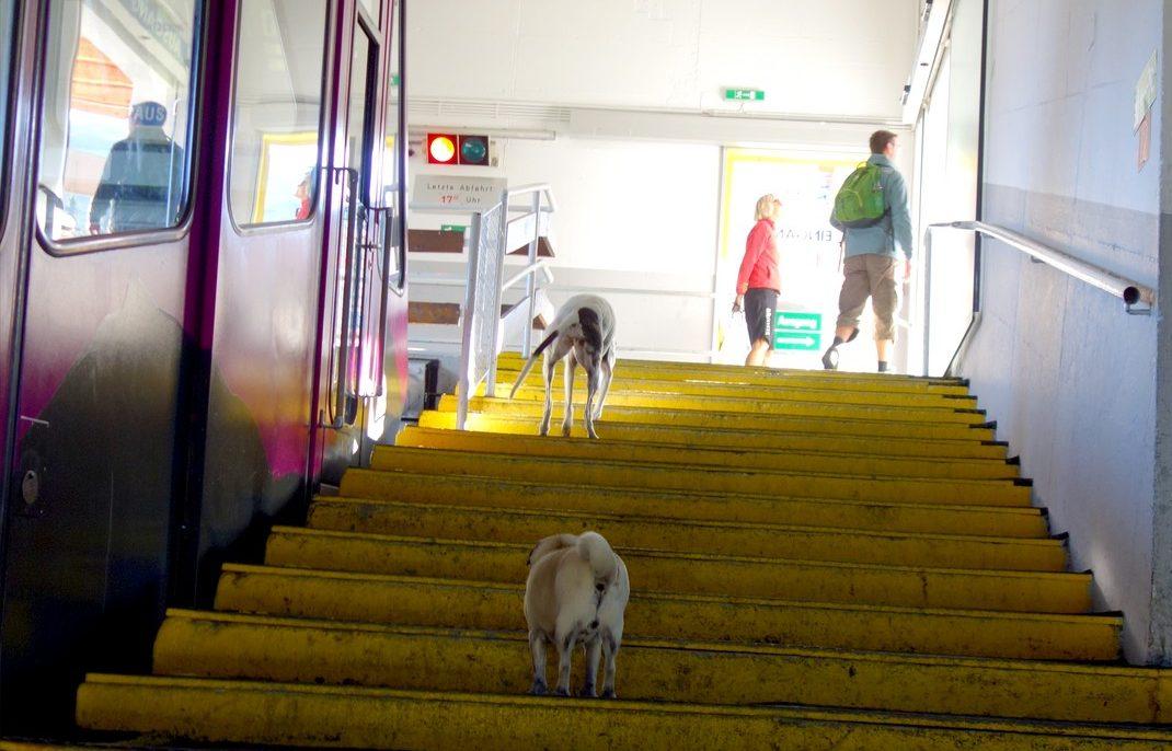 Фуникулёр и собачки -Австрия