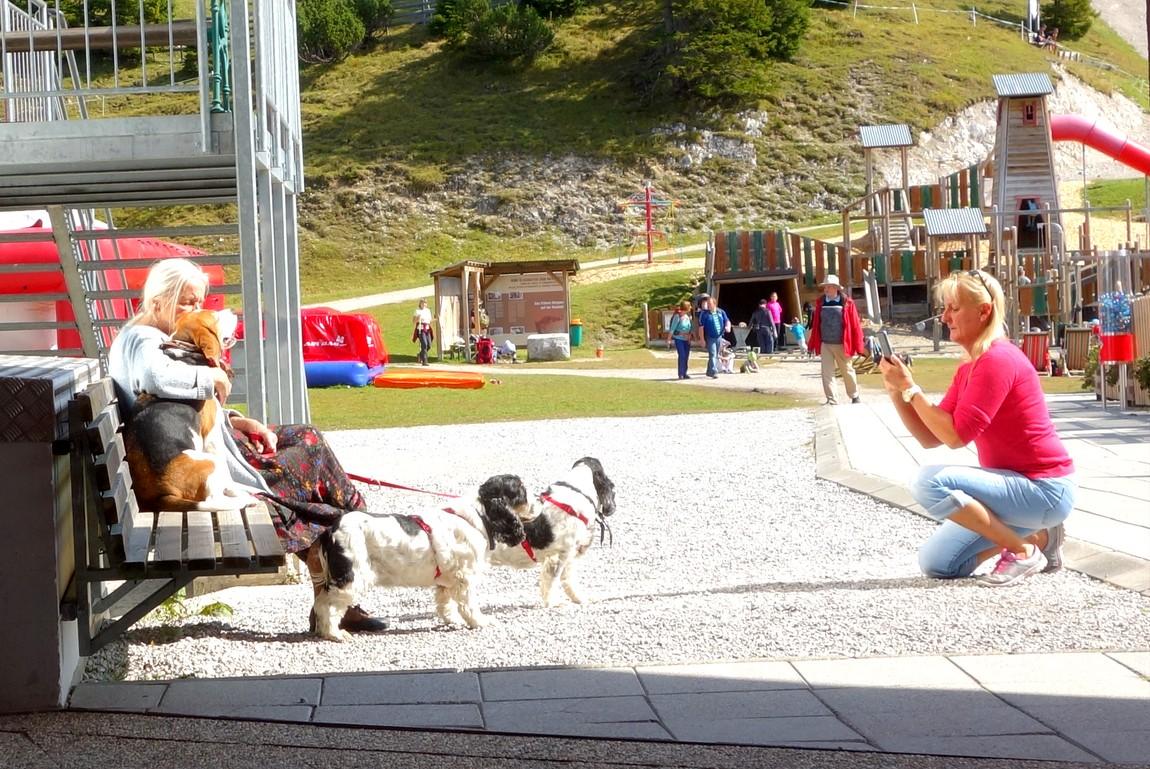 Позируют собачки - Австрия