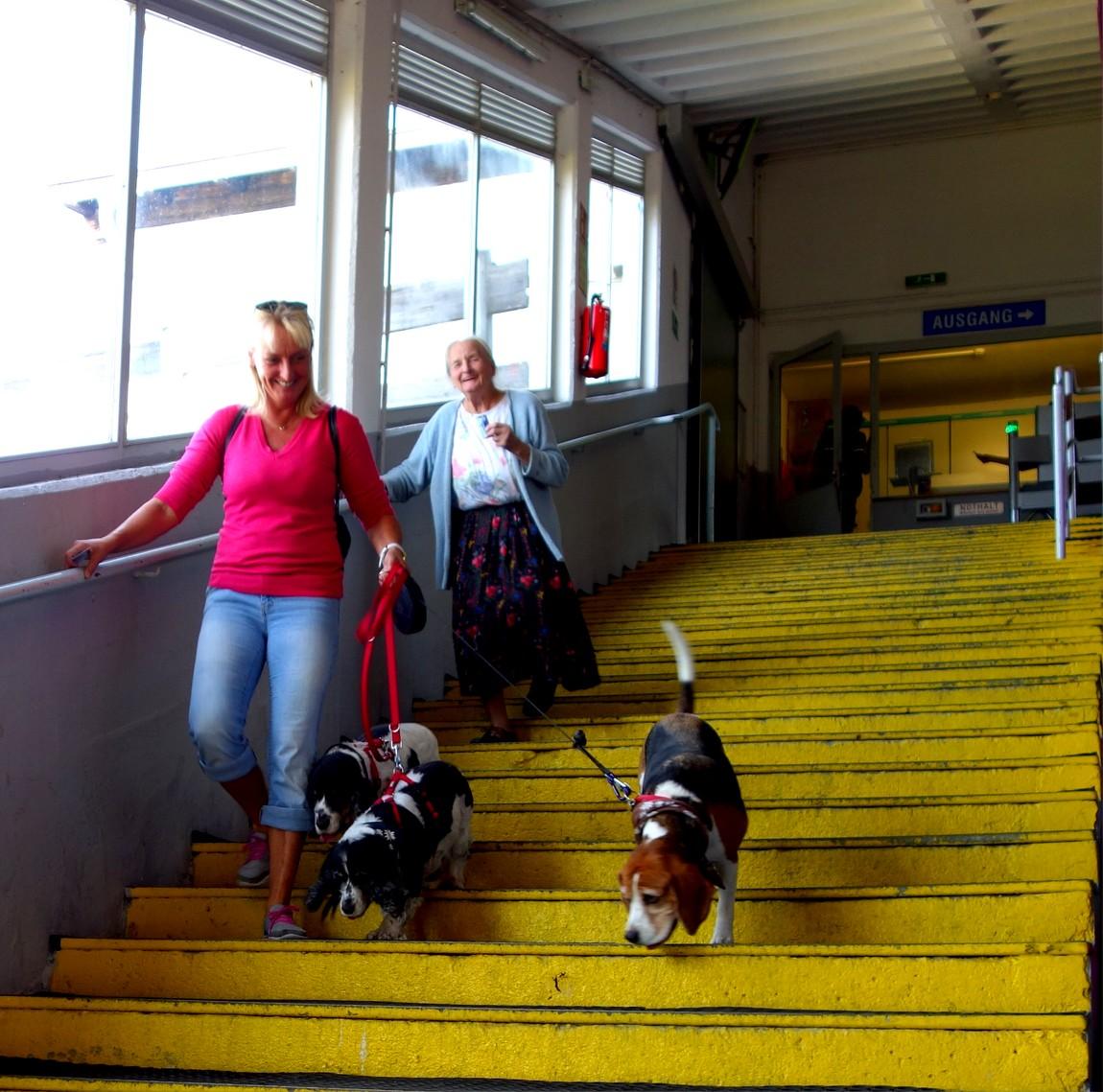 Собачки в пути после канатной дороги