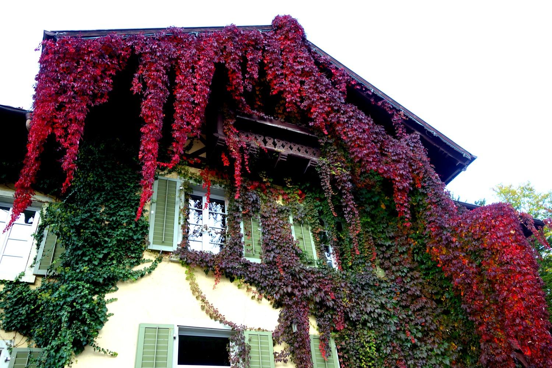 Дом в цветах - Австрия