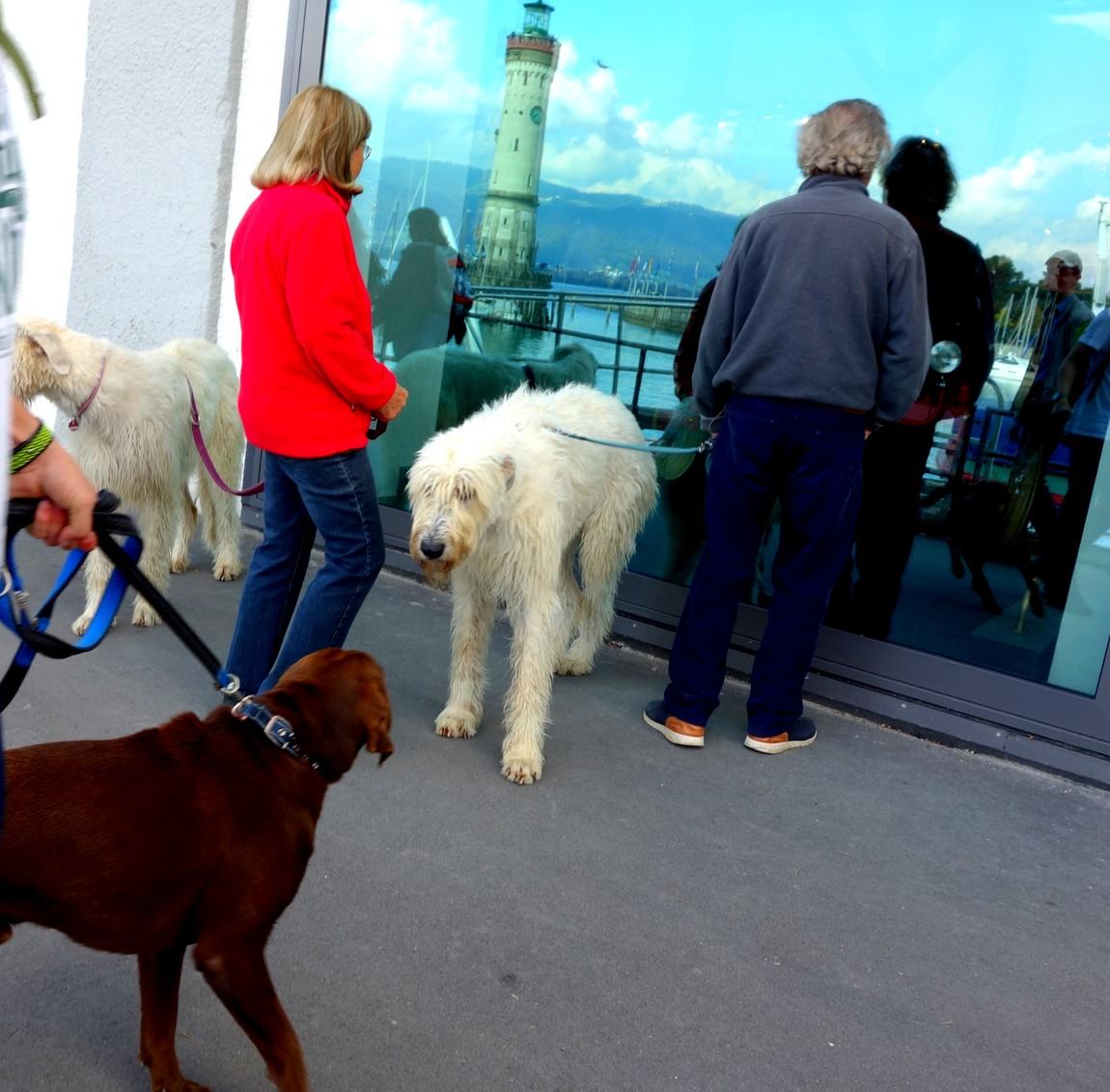 Собаки в Австрии