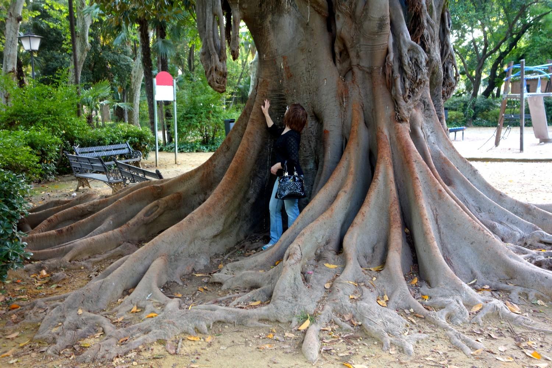 Парк в Испании - вековые деревья