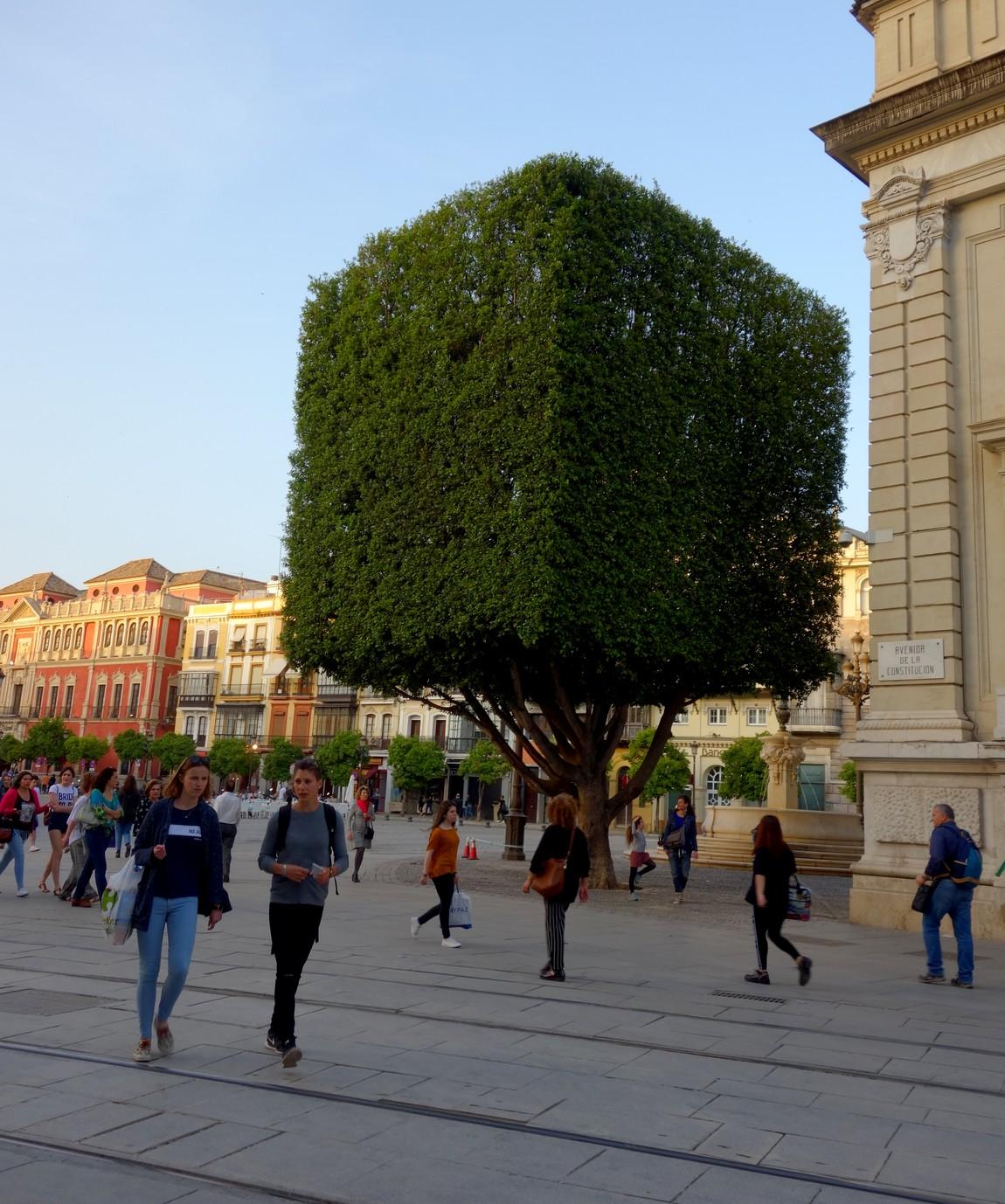 Дерево кубической формы