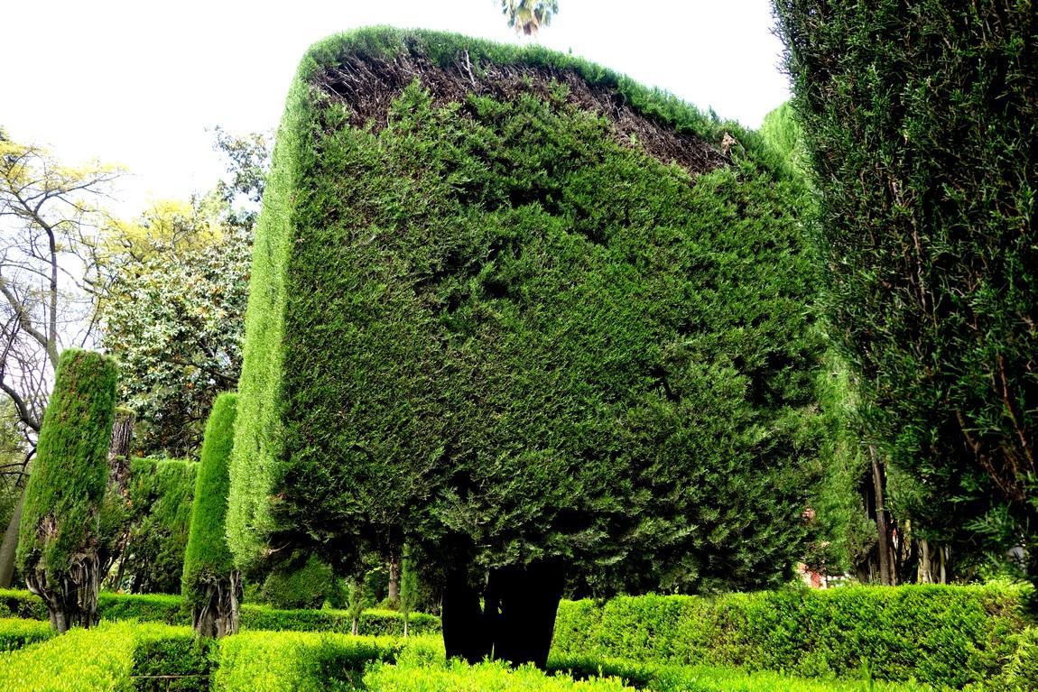 Дерево кубической формы в Испании