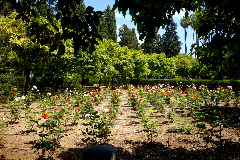 Сады Алькасар в Севилье