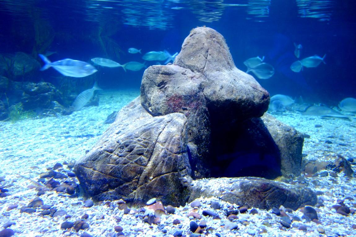 Морской аквариум (Sea Life)