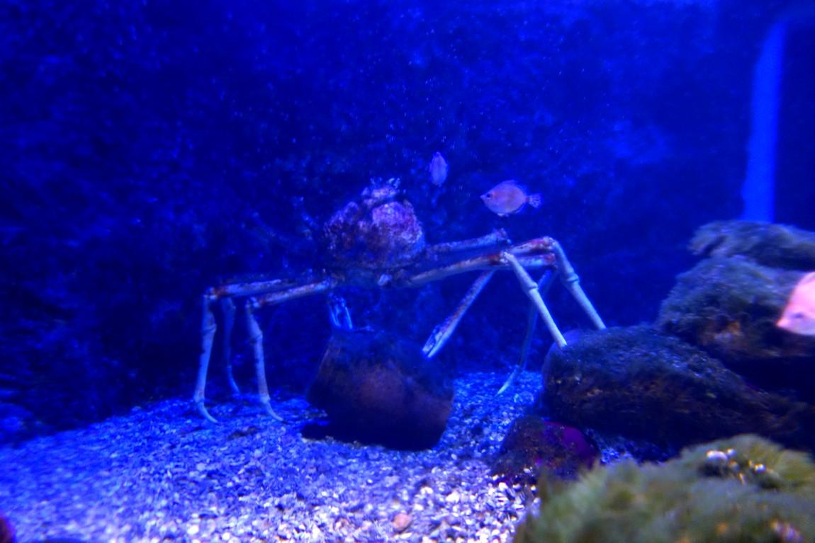 Морской краб-лобстер в Аквариуме Испании