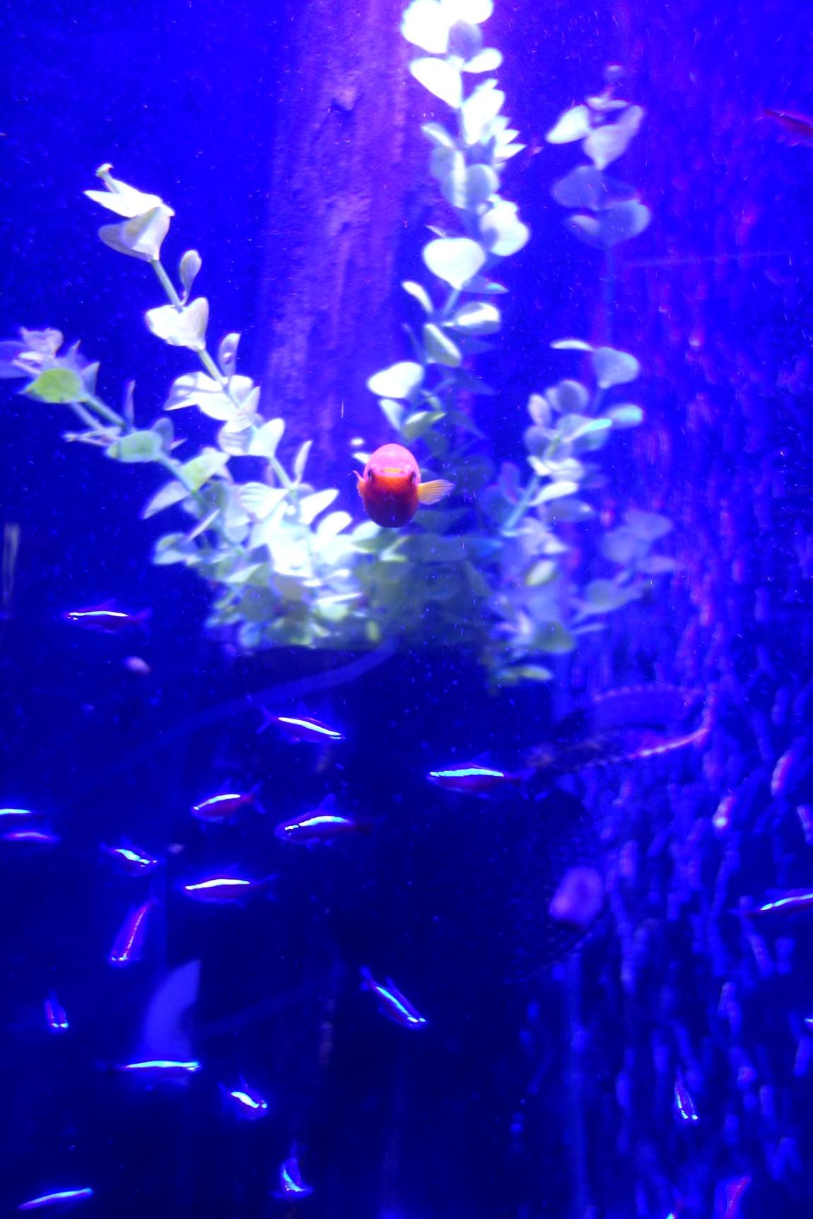 Морской аквариум (Sea Life) Малага