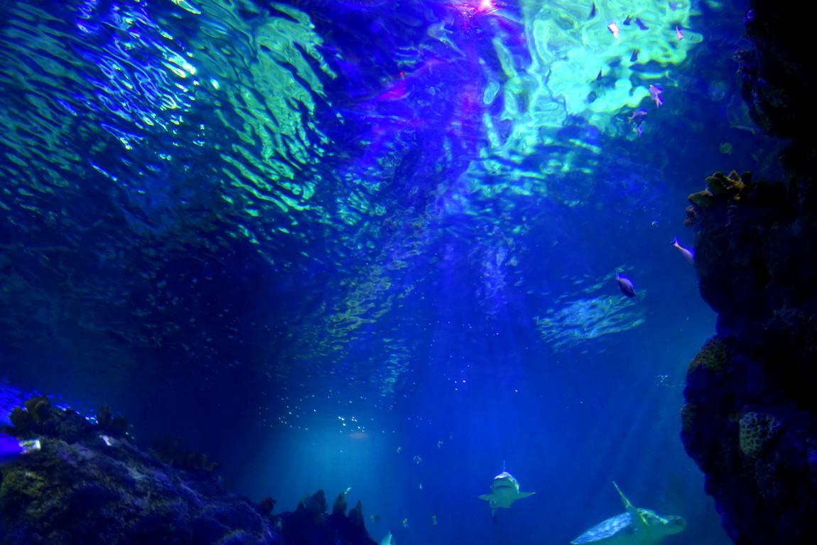 Таинственный свет пробивается сквозь толщу воды. -Оеанариум в Малаге