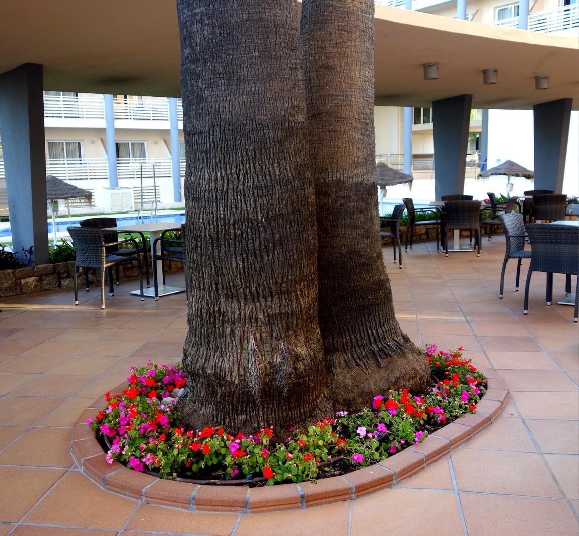 Огромные пальмы в Малаге