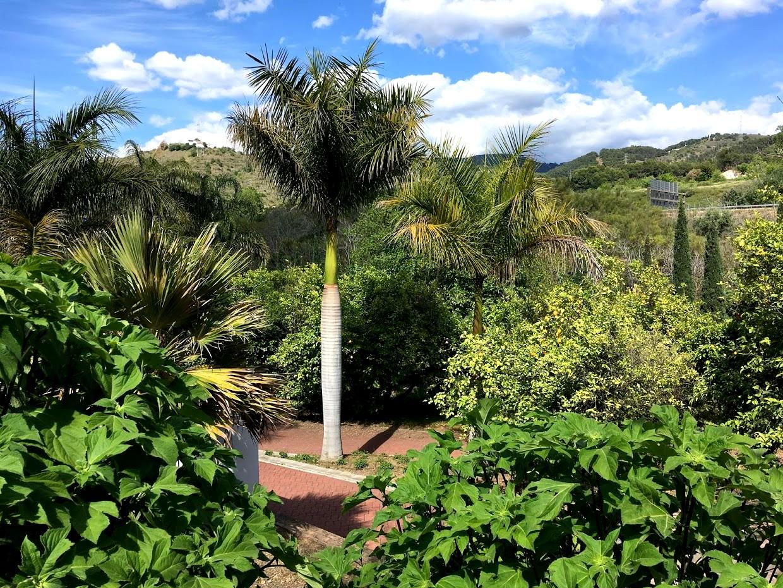 Ботанический сад La Concepcion