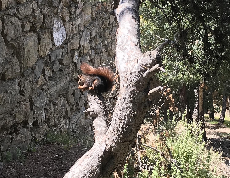 Крепость Хибральфаро (Castillo de Gibralfaro) -парк